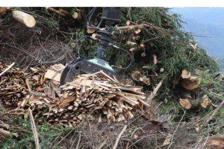 Biomasa en monte.