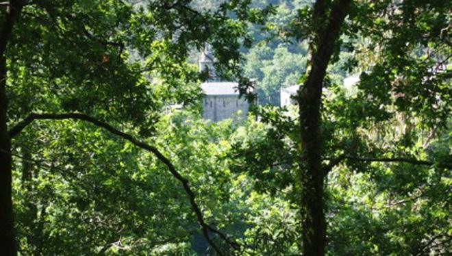 Como lle afectará o cambio climático aos carballos e rebolos en Galicia?