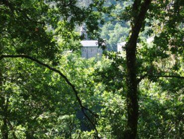 """PEFC organiza un foro online sobre """"Os bosques, os seus produtos e servizos no mundo post-Covid"""""""