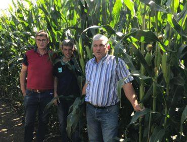 Gandeiros do Deza mercarán este ano o millo forraxeiro na comarca da Limia