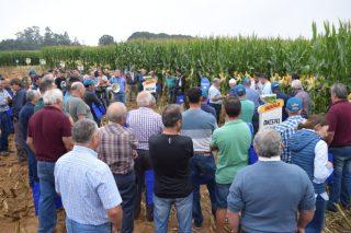 Dekalb presenta en Arzúa as súas próximas novidades en cultivo de millo