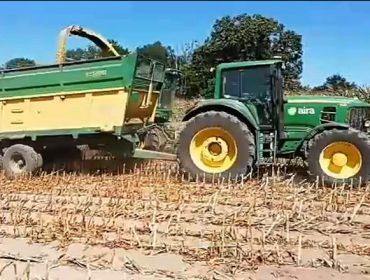 Vídeo del primer ensilado del maíz en Galicia