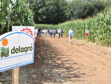 Variedades máis resistentes e dixestibles e novos tipos de picado marcarán o cultivo do millo forraxeiro