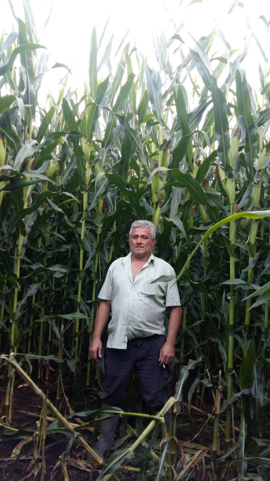 Carlos Fernández, o agricultor que cultiva millo forraxeiro para os gandeiros de Cobideza