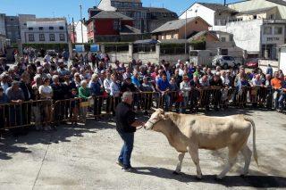 Media de 1.940 euros por animal na poxa de ACRUGA na Fonsagrada