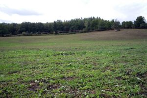 As pradeiras aínda se están a recuperar, 10 anos despois, das esixencias para a produción de millo