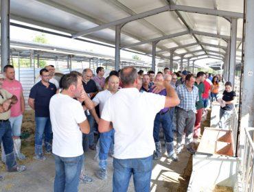El centro de recría de la Diputación de Lugo ya alberga 1.100 terneras de 50 ganaderías