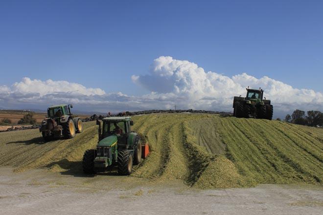 silo maíz Pioneer
