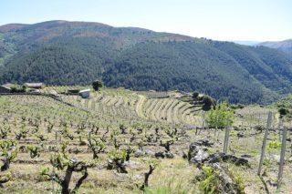 Claves de manexo do viñedo para enfrontar o cambio climático