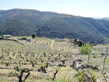 Claves de manejo del viñedo para enfrentar el cambio climático