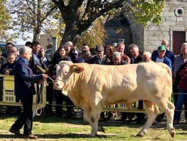 A poxa de Adai acada un prezo medio de 2.650 euros por animal