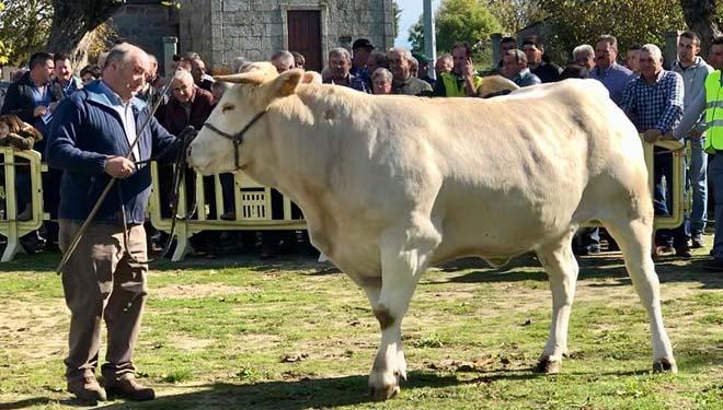La subasta de Adai alcanza un precio medio de 2.650 euros por animal