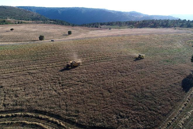 Coren colleita as súas primeiras 50 hectáreas de cereal ecolóxico en Ferreira de Pantón