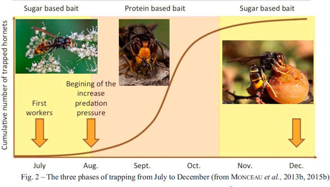 Variacións na alimentación da Vespa velutina ó longo do ano.