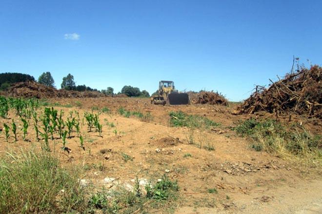 O enredo burocrático de cando se quere transformar monte en terra de cultivo