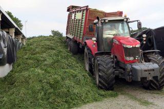 Traballan 140 hectáreas de terreo, das que botan a millo 73