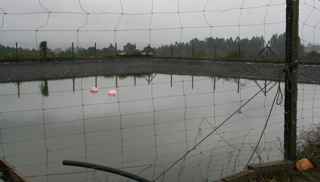 Plantacion-Kiwi-Tomino-Balsa-auga-