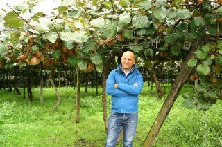 """""""Logramos aumentar a produción de kiwi un 30% e ser máis sostibles"""""""
