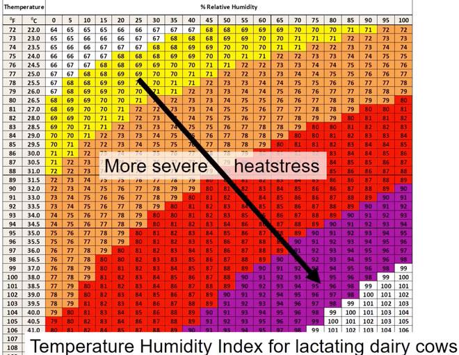 Temperatura-y-humedad-que-genera-estres-la-vacas-de-leche-