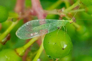 Jornada sobre el uso sostenible de produtos fitosanitarios en el viñedo