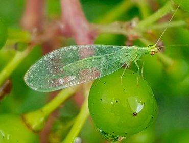 Xornada sobre o uso sostible de produtos fitosanitarios na viña