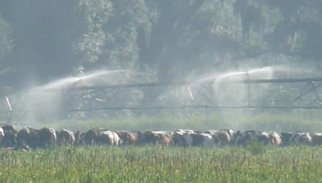 aspersores-para-o-rego-de-campos-e-refrescar-vacas-