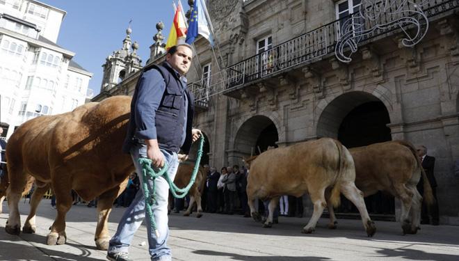 O desfile de gando, que terá lugar o sábado pola mañá, percorrerá as rúas do centro da cidade de Lugo