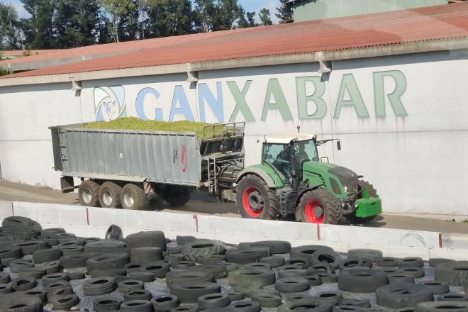 Ensilando en GANXABAR (Mazaricos)