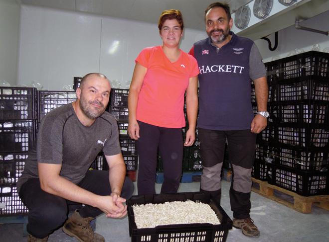 Jesús, Rocío e Alfonso, na cámara onde refrixeran a faba fresca que lles traen os produtores