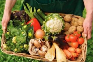 Curso de agricultura ecolóxica en Viveiro