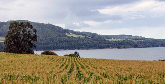 millo Agropres3