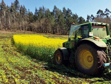 Vantaxes de sementar nabos despois do millo forraxeiro: O exemplo de 3 ganderías