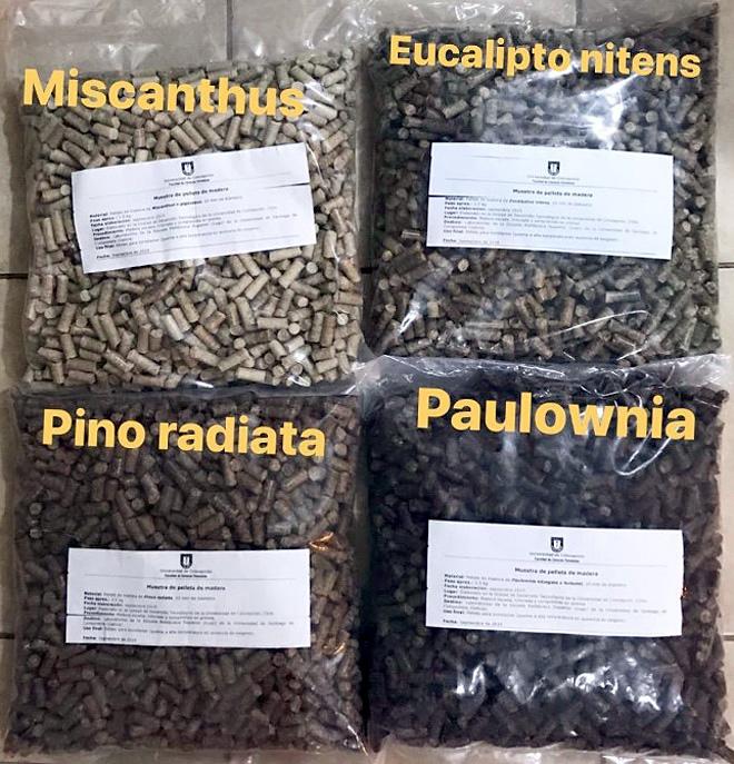 Pelets fabricados coas distintas especies analizadas en Chile. No caso do piñeiro radiata empregouse tamén a casca, o que escureceu a cor do pelet resultante