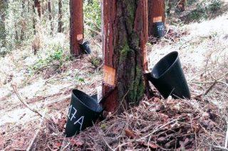 Xornada sobre produción combinada de resina e madeira