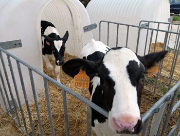 Os tratantes deixan de recoller animais para vida ante o peche dos mercados semanais