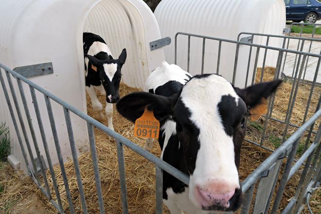 Que factores determinan o benestar da recría na granxa?