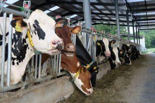 O Sindicato Labrego dubida da efectividade da Conta Láctea para negociar coa industria