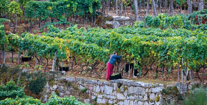 Unións pide á Xunta que impulse un estudo dos custes de produción na viticultura galega