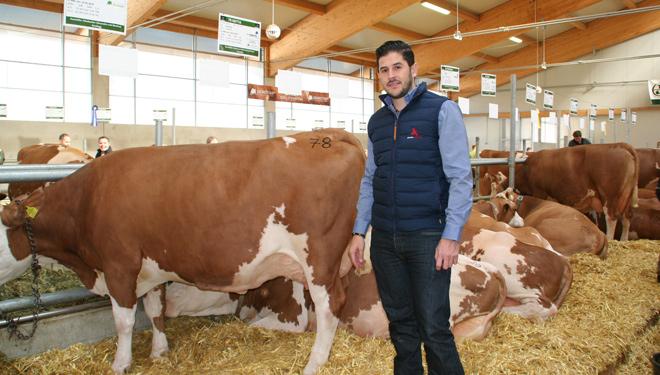 """""""Los ganaderos empiezan a apostar por las vacas Fleckvieh porque ven una oportunidad de tener mayor rentabilidad"""""""