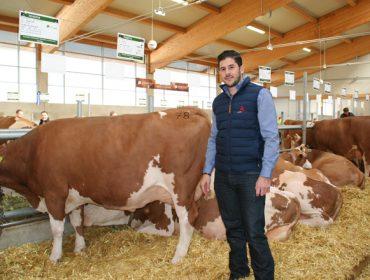 """""""Os gandeiros empezan a apostar polas vacas Fleckvieh porque ven unha oportunidade de ter maior rendibilidade"""""""