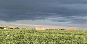 Nas fincas a carón da granxa producen varias colleitas de alfalfa na primavera e verán