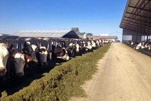 Andersen Dairy4