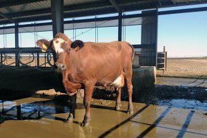 Andersen Dairy5