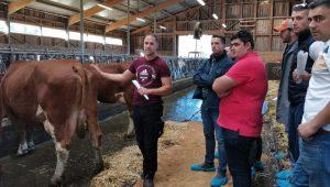 Ganaderos-gallegos-en-una-granja-lactea-de-Austria-con-raza-Fleckvieh
