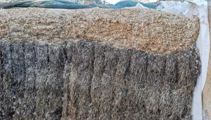 O silo conta cunha capa do primeiro corte de herba, outro do segundo corte e unha capa de ensilado de millo.