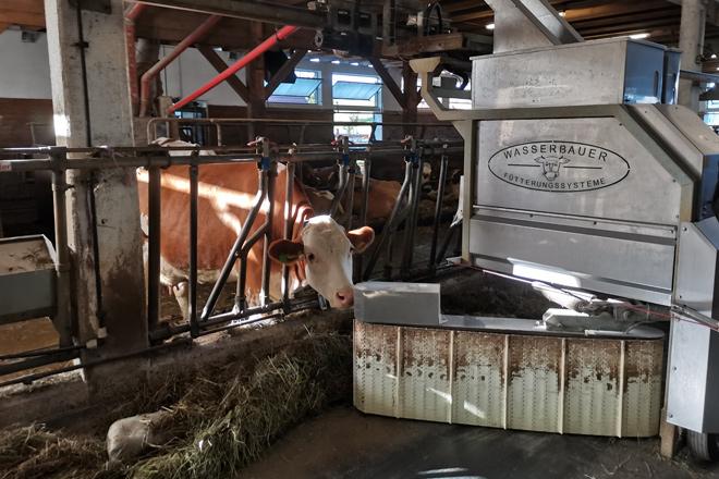 Ganderia-Fischer-Robot-Butler-comida-penso-Vacas-Fleckvieh--