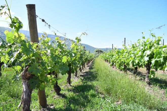 O Goberno aproba dar máis facilidades ao sector vitivinícola para acceder a axudas