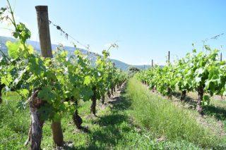 ¿En que Comunidades medra a superficie de viñedo?