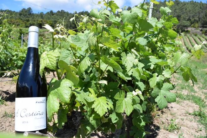 alan de val viñedos valdeorras 8