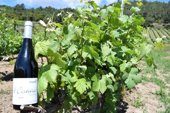 alan de val viñedos valdeorras 9